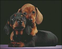 Adorable Dachshund Puppys Wallpaper from Puppies. Two adorable little Dachshund puppies a red and a black & tan, real cuties. Dachshund Funny, Dachshund Puppies, Weenie Dogs, Dachshund Love, Cute Puppies, Cute Dogs, Dogs And Puppies, Daschund, Doggies