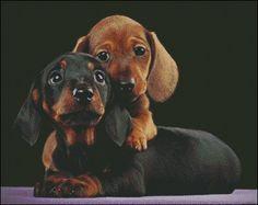 Adorable Dachshund Puppys Wallpaper from Puppies. Two adorable little Dachshund puppies a red and a black & tan, real cuties. Dachshund Funny, Dachshund Puppies, Weenie Dogs, Dachshund Love, Cute Puppies, Dogs And Puppies, Daschund, Dachshund Rescue, Dapple Dachshund