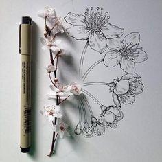 Noel Badges Pugh. Almendros y cerezos en flor
