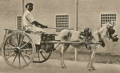 Do you remembed the days of donkey carts? http://www.caribbeandreamsmagazine.com/about-barbados/history-of-barbados