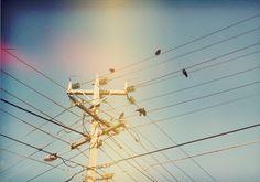 Birds on a wire. Blue sky.
