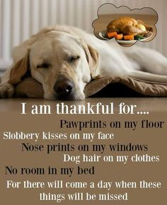 And they will be dearly missed. All the mess is more than worth it. #dogs #doglovers