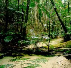 Rainforest on Fraser Island Sand Island, Fraser Island, Australia Travel, Oh The Places You'll Go, Worlds Largest, Explore