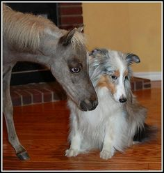 horse and dog.....I'm still trying to understand why there's a horse in the house....