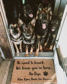 Funny Dogs Pictures No Words Sable German Shepherd, German Shepherd Puppies, German Shepherds, Dog Quotes Funny, Funny Dogs, Funny Kitties, Funny Horses, Adorable Kittens, 9gag Funny