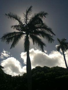 take me back to my hawaiian christmas