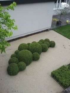 topiary never goes out of style. Topiary creates structure, formality and Garden topiary never goes out of style. Topiary creates structure formality andGarden topiary never goes out of style. Topiary creates structure formality and Topiary Garden, Garden Art, Boxwood Garden, Boxwood Topiary, Back Gardens, Small Gardens, Formal Gardens, Outdoor Gardens, Contemporary Garden