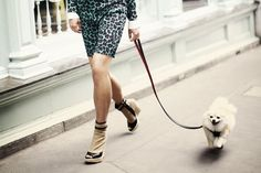 Fashion dogs | Designer pet wear in Paris (Condé Nast Traveller)
