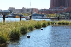 floating wetlands | Harbor Floating Wetlands are made up of 2,000 square feet of floating ...