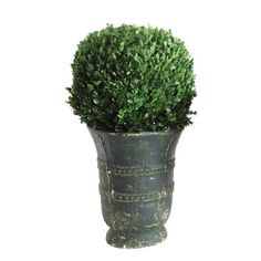 Found it at Wayfair - Garden Preserved Boxwood Round Topiary in Pot