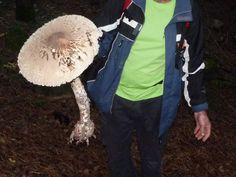 Μανιτάρι-γίγαντας στα βουνά της Ξάνθης | tanea.gr Canada Goose Jackets, Winter Jackets, Winter Coats