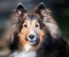 Oilpainting of your dog. 100% handmade. By Patrycja Lewicka