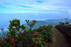 Gunung Gede Pangrango National Park, Indonesia