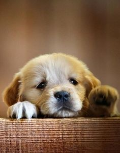 cutie pie :)