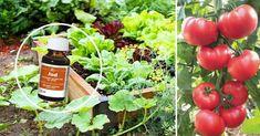 Flower Drawing Images, Flower Images, Garden Trellis, Garden Gates, Flower Aesthetic, My Secret Garden, Raw Food Recipes, Bonsai, Garden Landscaping