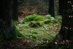 Fairy mounds by erynlasgalenphotoart