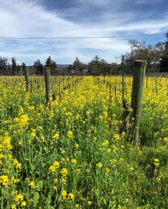 Spring is a beautiful time to visit Calistoga. Join us! http://mountviewhotel.com/reservations