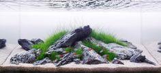 Minimalist Iwagumi 60cm ... pin by Aqua Poolkoh