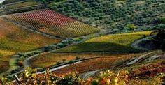 Afbeeldingsresultaat voor paisagem douro portugal
