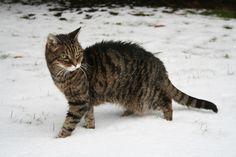 Carolas Kater Vincent ist ein echter Katzenopa. Sieht man ihm aber nicht an, oder?