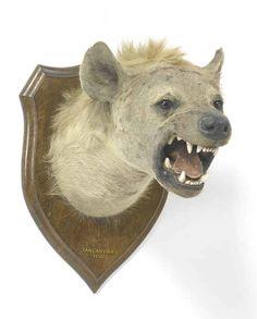 hyenahead.jpg win
