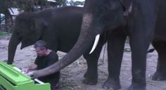 Watch an elephant, playing piano in Thailand's sanctuary