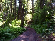 Newport, Oregon-  Make's me eanna go camping