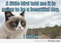 A Little Bird.