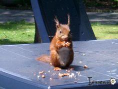 Een foto uit de tuin van Dragon #eekhoorn