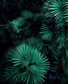 Green vibes / Justina Blakeney