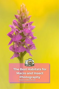 In this nature photography tutorial find out some of the best places to photograph insects and other macro subjects. Wildlife Photography Tips, Insect Photography, Close Up Photography, Photography Basics, Photography Tips For Beginners, Underwater Photography, Photography Tutorials, Cool Pictures, Cool Photos