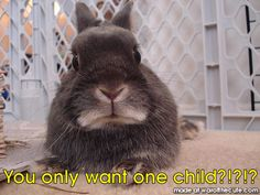 War of the Cute: Cute Animal Pictures and Captions