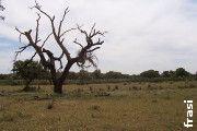 Seca e invasão por matos podem estar a contribuir para a ... - Notícias - Naturlink