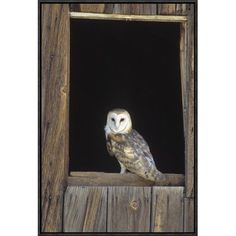 Global Gallery Barn Owl Perching on Barn Window, North America by Konrad Wothe Framed Photographic Print on Canvas Size: