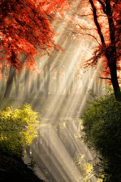 Light rays reaching through the trees reflecting its gracious beauty upon serene waters