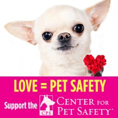 Support Center for Pet Safety