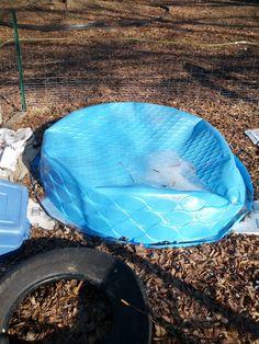Raising tilapia fish in a backyard basement or garage can for Garden pool tilapia