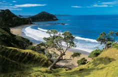This quite secluded little bay is situated on the Tutakaka Coast and offers some of the best surf in Northland. Daisy Bay gets its name from the large clusters of daisy flowers that often spring up in the grasses behind the beach