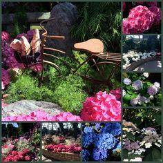 LIVING THE GARDENING LIFE: Amour de Paris at Muttart Conservatory April 18 - June 21/15