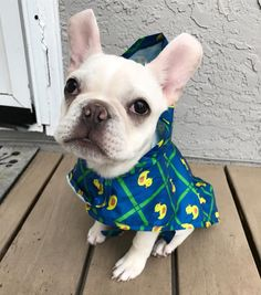 See this Instagram photo by @baconthefrenchie_ • 132 likes