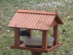 Passion Bassin - Les oiseaux sauvages réalisation de mangeoires et nichoirs