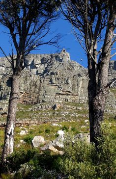 Table Mountain upper cable car station viewed through trees Indoor Climbing Gym, Rock Climbing, Climbing Wall, Kruger National Park, National Parks, Cape Town Holidays, Travel Sights, Port Elizabeth, Table Mountain