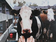 Ivan Durrant, Australia (b.1947) • Red Float 2000 • Acrylic on board •Donated by artist • 2005.005 #cow #painting #IvanDurrant #AustralianArt