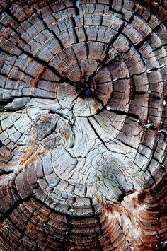 Looking inside wood. The rings are yrs the tree been alive