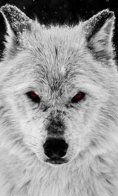I was a wolf…and she, my moon.