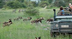 Chitabe Camp | Okavango Delta | Botswana | Africa Uncovered