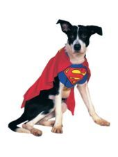 Superman Dog Costume - Party City For Bear: Super Dog! #halloween #partycity