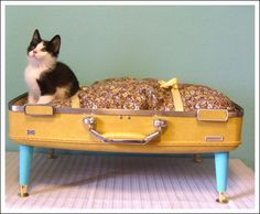 A pet bed from an old suitcase....brilliant, not to mention adorable!