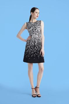 Maggy London | Monotone Print Ponte Dress | Summer Dress