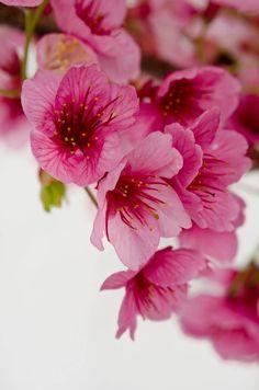 *Flor de canto
